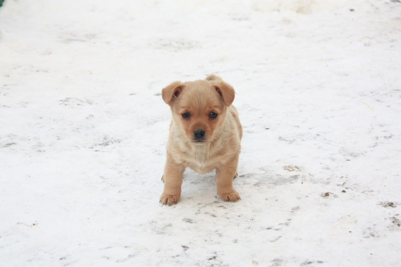 Beautiful stock photos of baby animals, Animal Themes, Brown, Canine, Cold Temperature