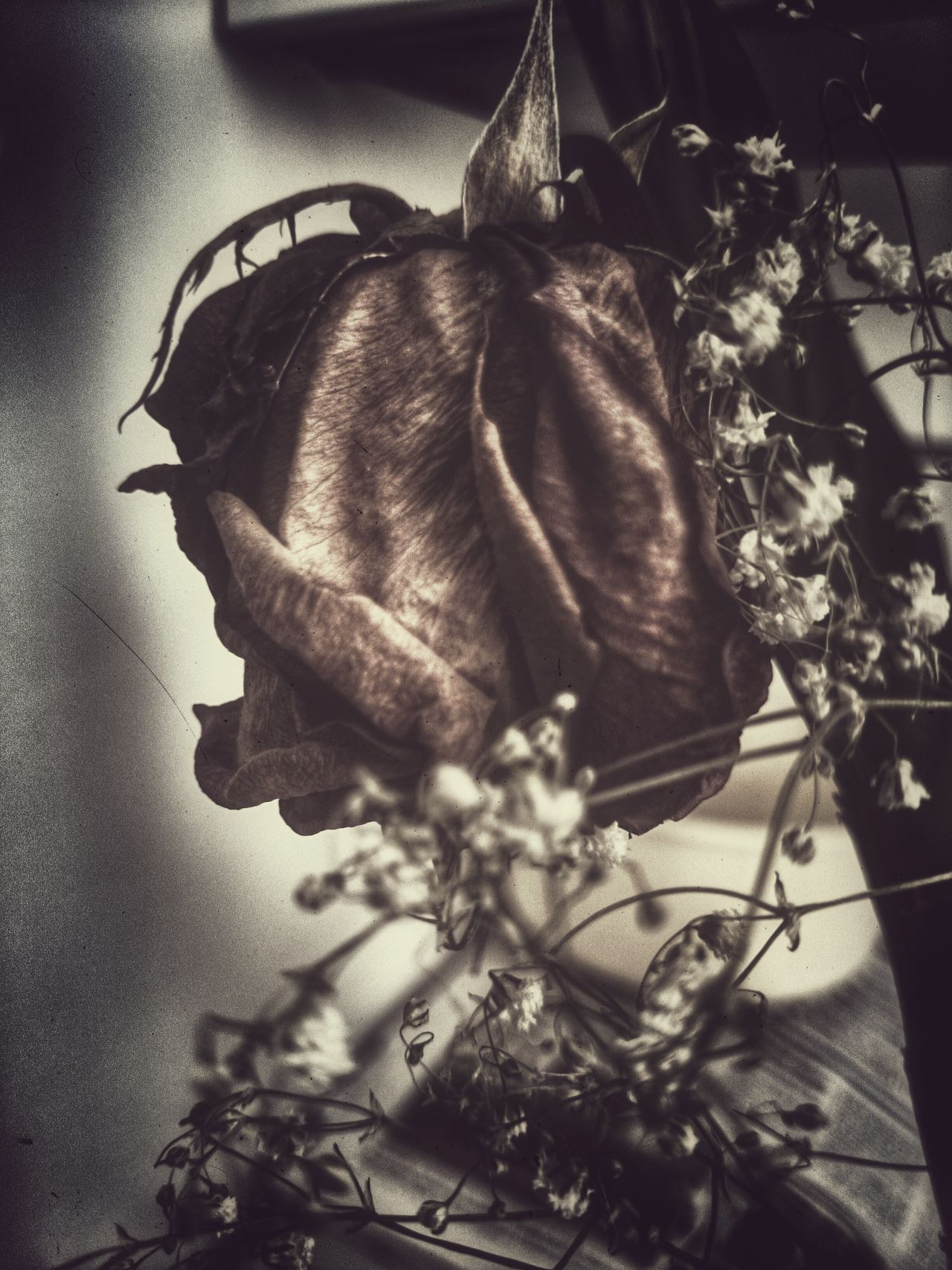 The Beauty Of Decay Rose♥ Still Life The Art Of Decay