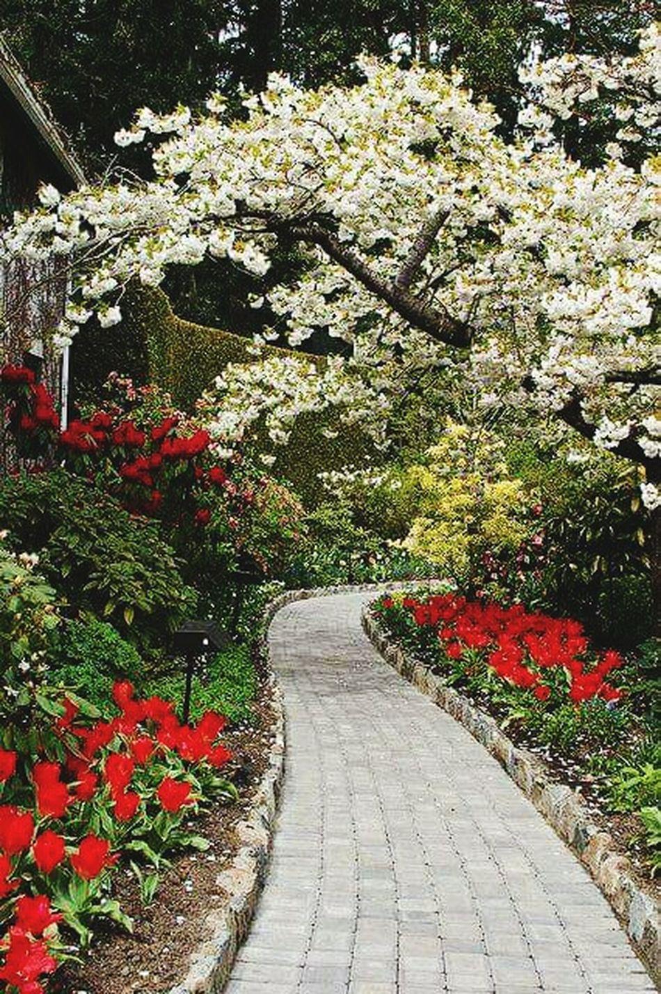 Hello World Colors Of Nature Beautiful Sweet Amazing_captures Flowerlovers