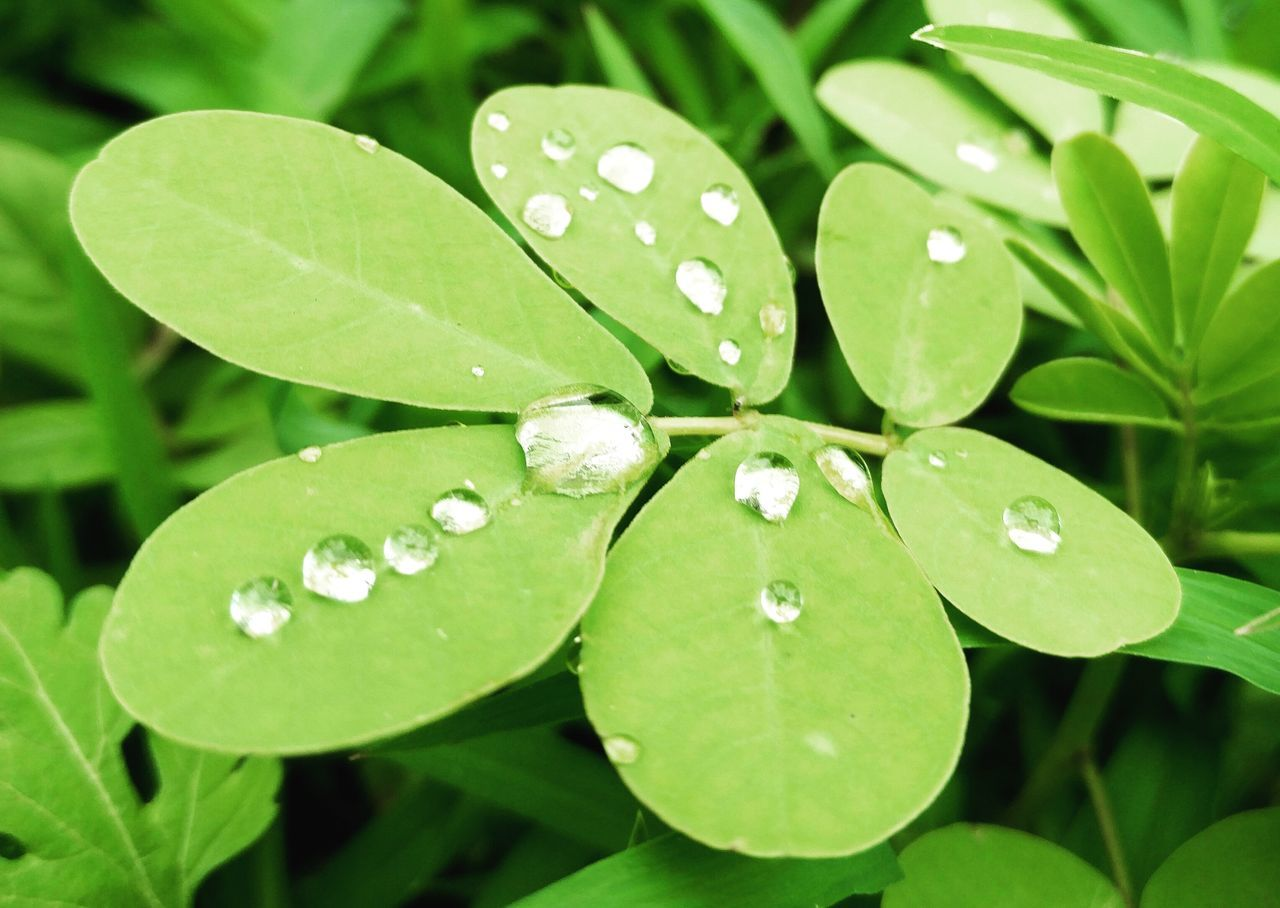 Nature Naturelovers Naturephotography Close-up Water Droplets Pearl Water Pearls After Rain Afterrain Beauty Shotononeplus2 Freshness Plants 🌱