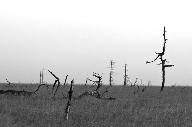 Clear Sky Day Grass Hohes Venn Landscape Mog Nature Tree Trees