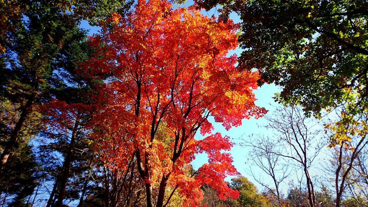 紅葉狩り11/13 紅葉 もみじ Autumn Leaves Autumn 紅葉狩り ハイキング Hiking
