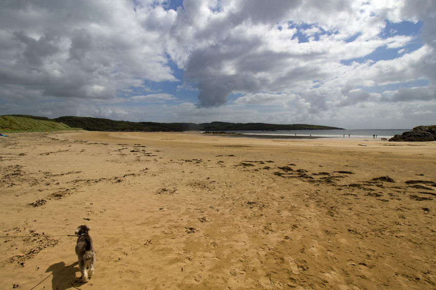 Beach Cloudy Dog Donegal Ireland Sand Shore Sky