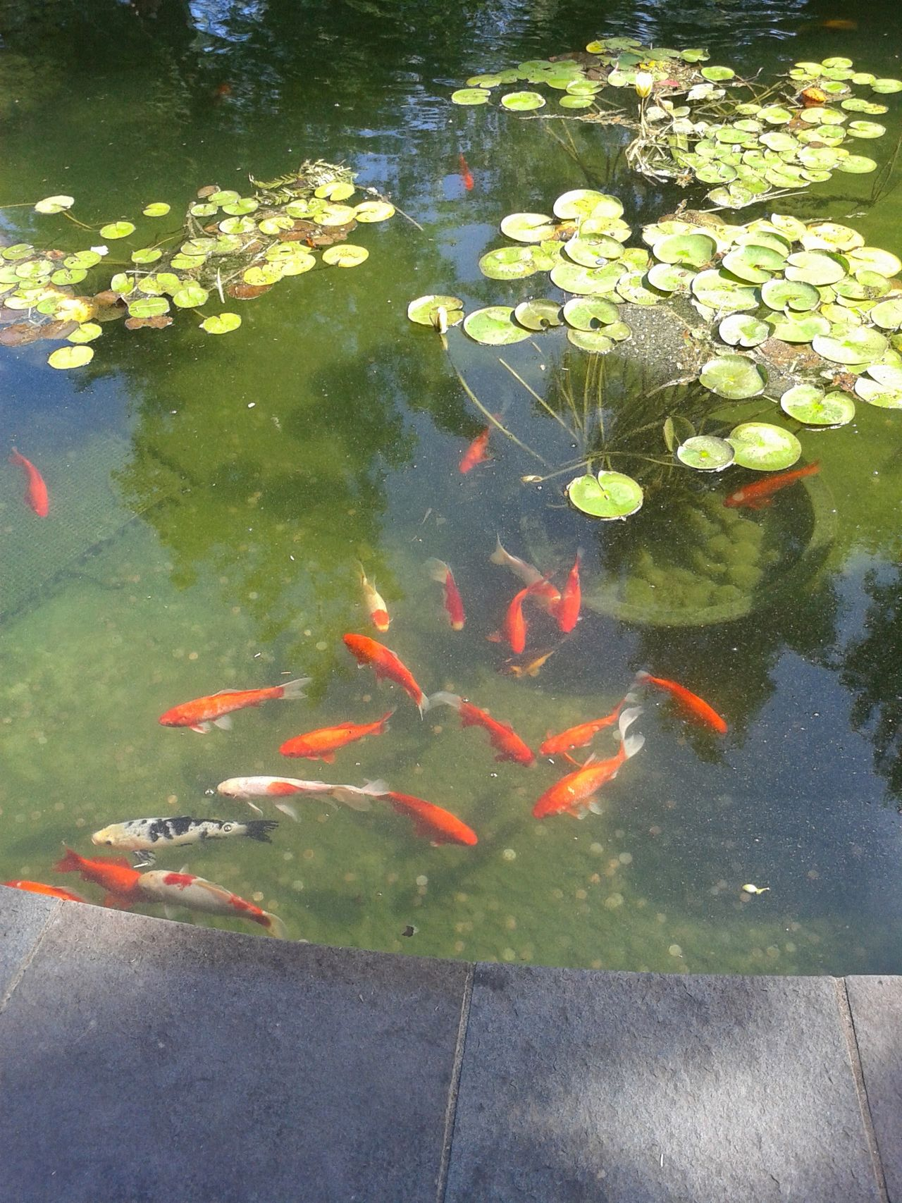 Fish Pond Life Animal Themes Nature Arboretum Sunlight Beauty In Nature Outdoors