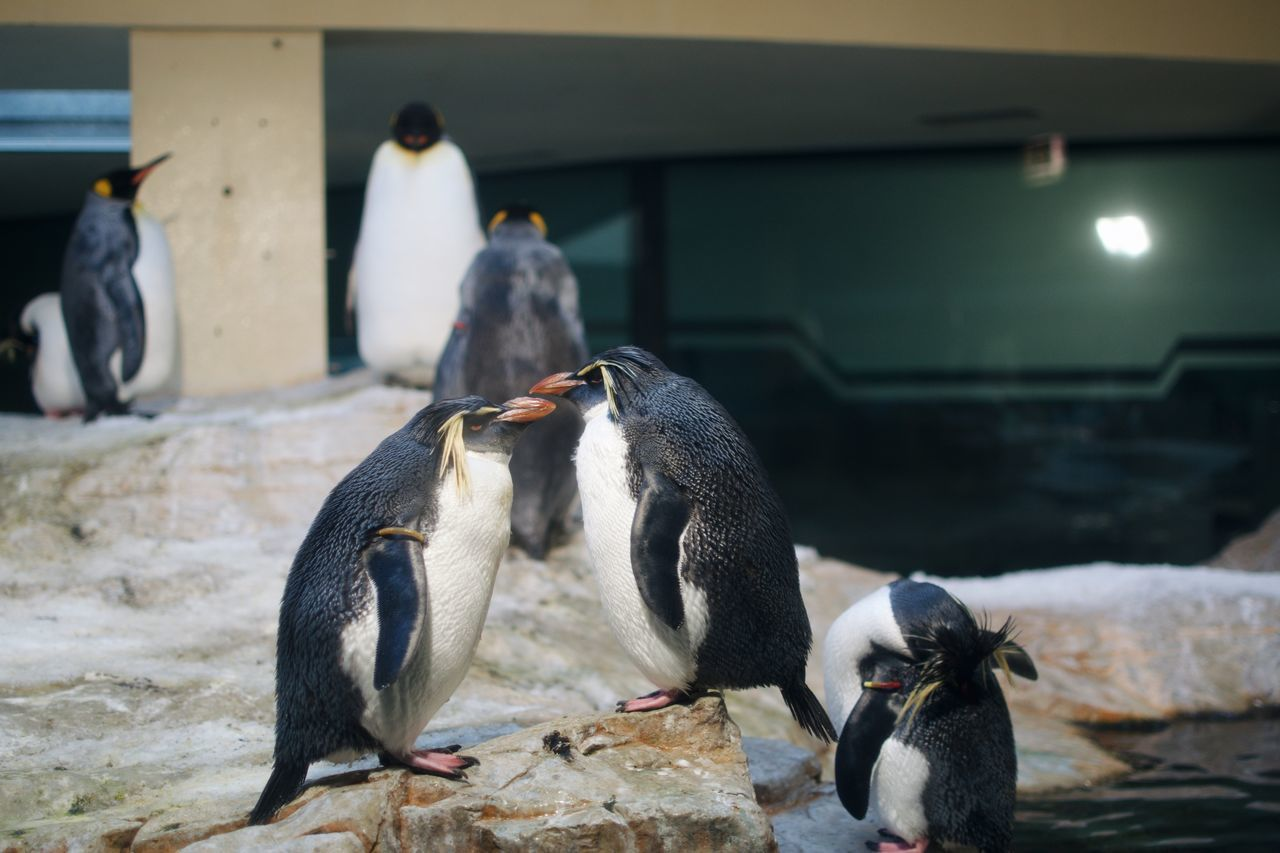 Animal Call Animal Themes Animal Wildlife Animals In The Wild Bird Day Five Animals No People Outdoors Penguin Togetherness