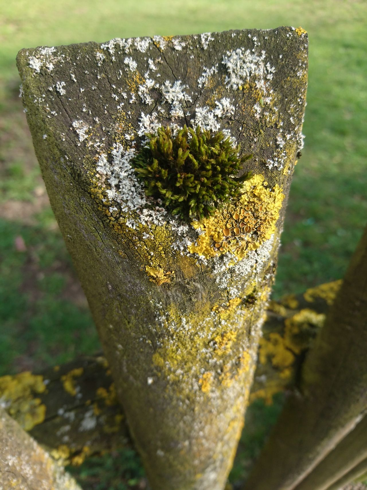 Close-up No People Nature Outdoors Day Beauty In Nature Freshness Wood - Material Moss-covered Moss Moss & Lichen Lichen