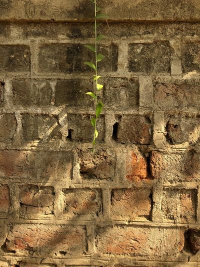 Wall - Building Feature Brick Wall Built Structure Architecture Full Frame Day Plant No People Outdoors Textured  Backgrounds Growth Close-up Building Exterior Nature