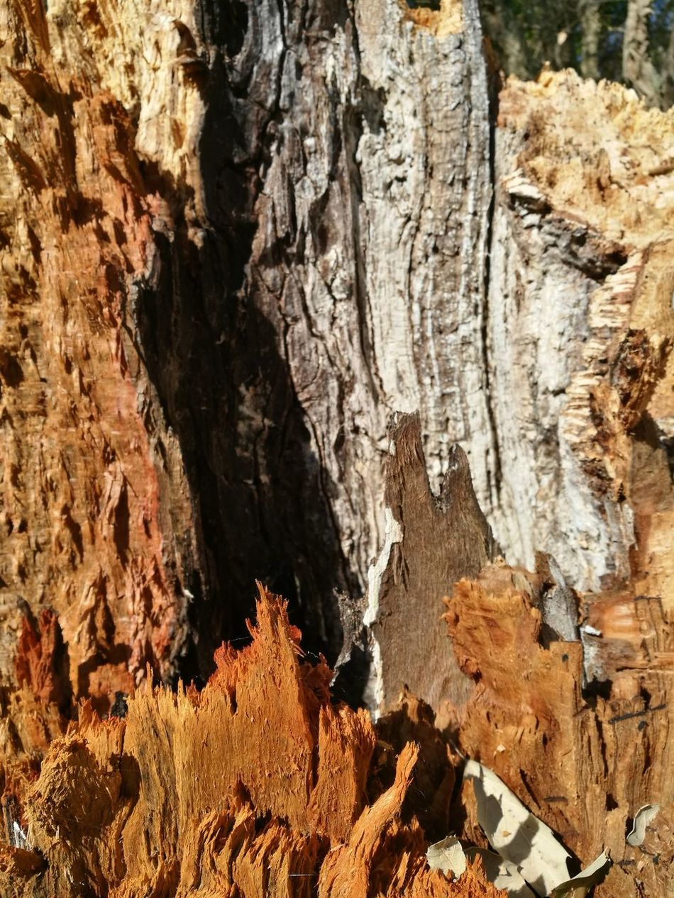 Wood - Material Wood Legno Wood Legno Tronco Textured  Rock - Object Day No People Outdoors Full Frame Close-up Nature