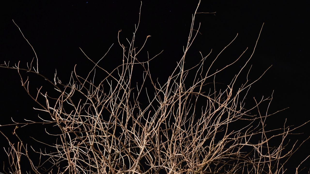 Backgrounds Black Background Bush Branches Bushes Illuminated Low Angle View Night Nightphotography No People Outdoors