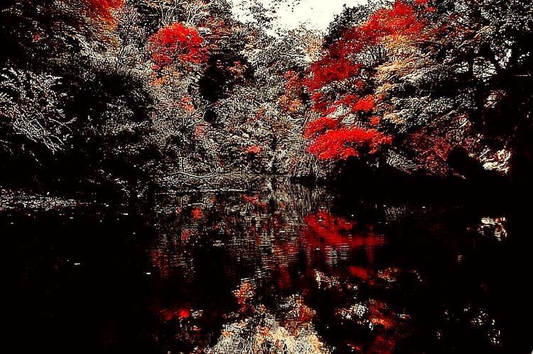 紅葉をモノクロームで表現できないかと、色々考えたけど無理だった(-。-💦 ボツ写真