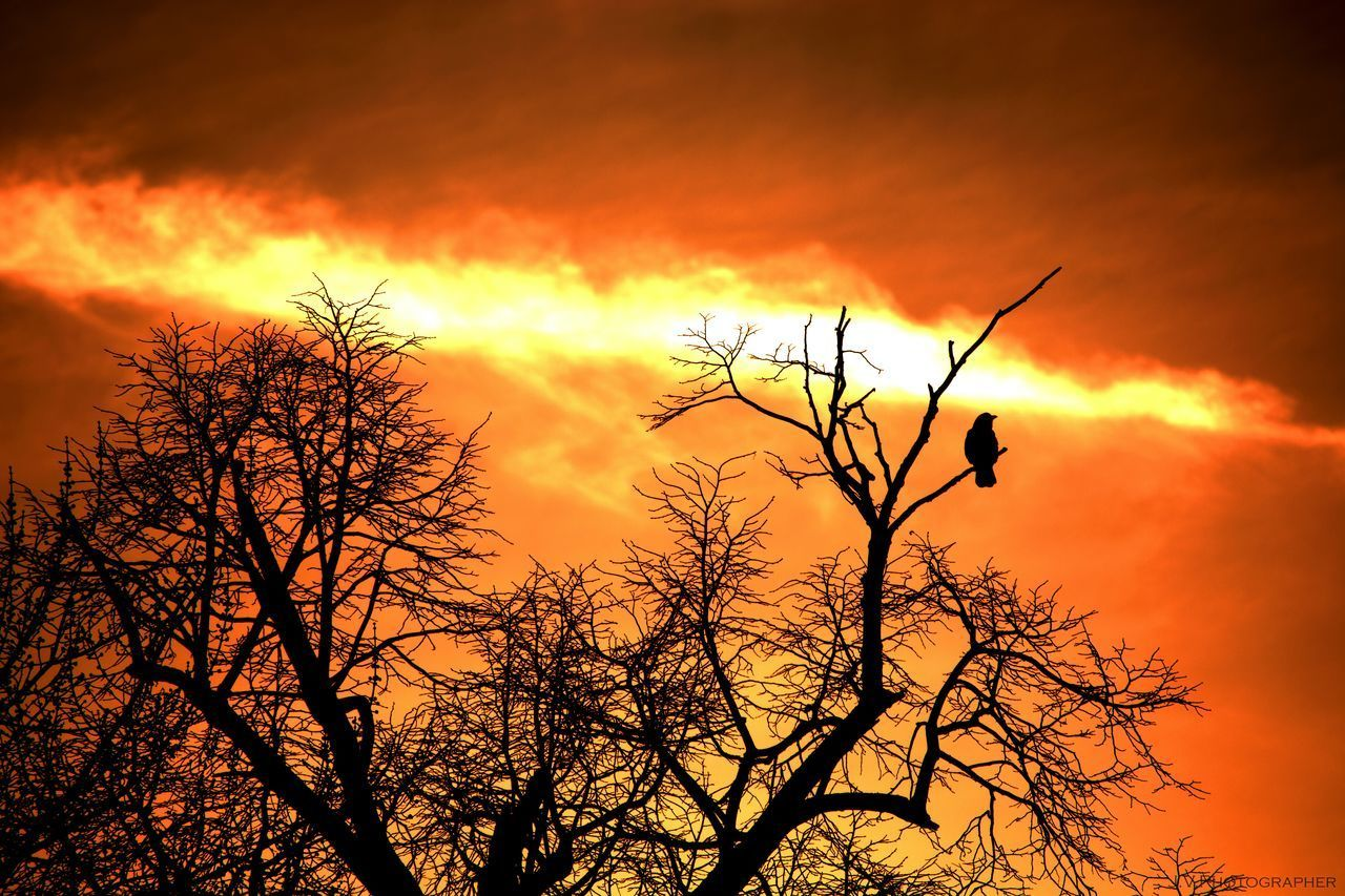Animal Themes Animals In The Wild Bare Tree Beauty In Nature Bird Branch Branches Day End Of The World Nature No People One Animal Orange Color Outdoors Perching Scenics Silhouette Sky Sky And Clouds Sky_collection Sunset Tranquility Tree Tree Trees