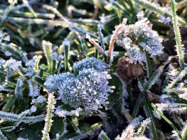 Frosty mornings Frost Frosty Frosty Morning Frosty Mornings Frosty Leaves Winter Winter Morning
