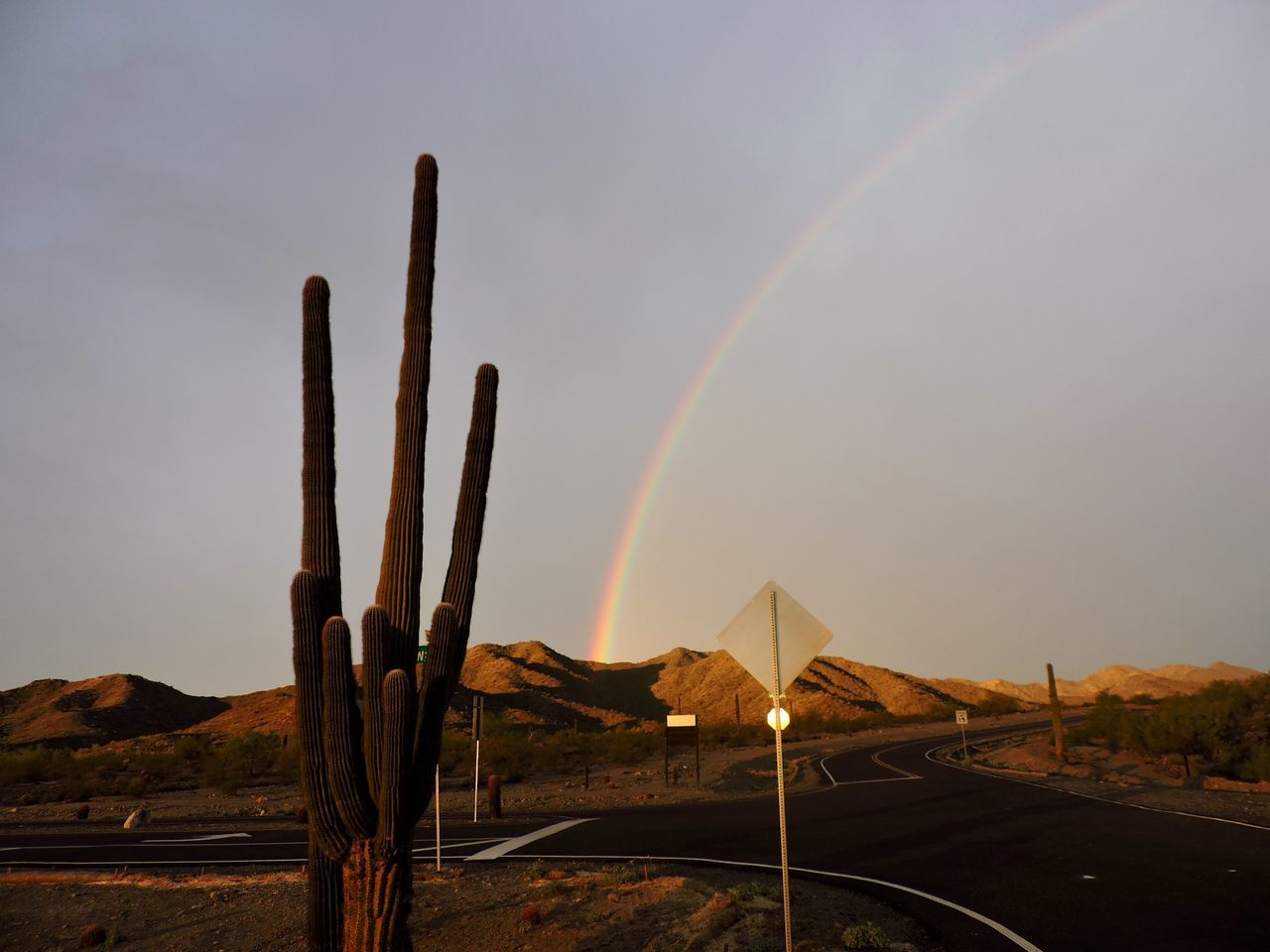 Rainbow over sky Desert Heat - Temperature Arid Climate Remote Nature Cactus Environmental Issues Outdoors Landscape Plant Growth No People Forest Fire Scenics Sky Ecosystem  Beauty In Nature Day