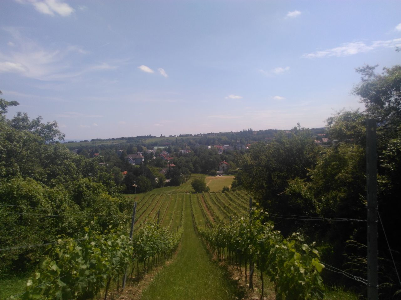 Perchtoldsdorf Austria Fruit Landscape Grape Wine Wein Winemaking Growth Vineyard Field Agriculture Tranquility Nature No People Weingarten Sky