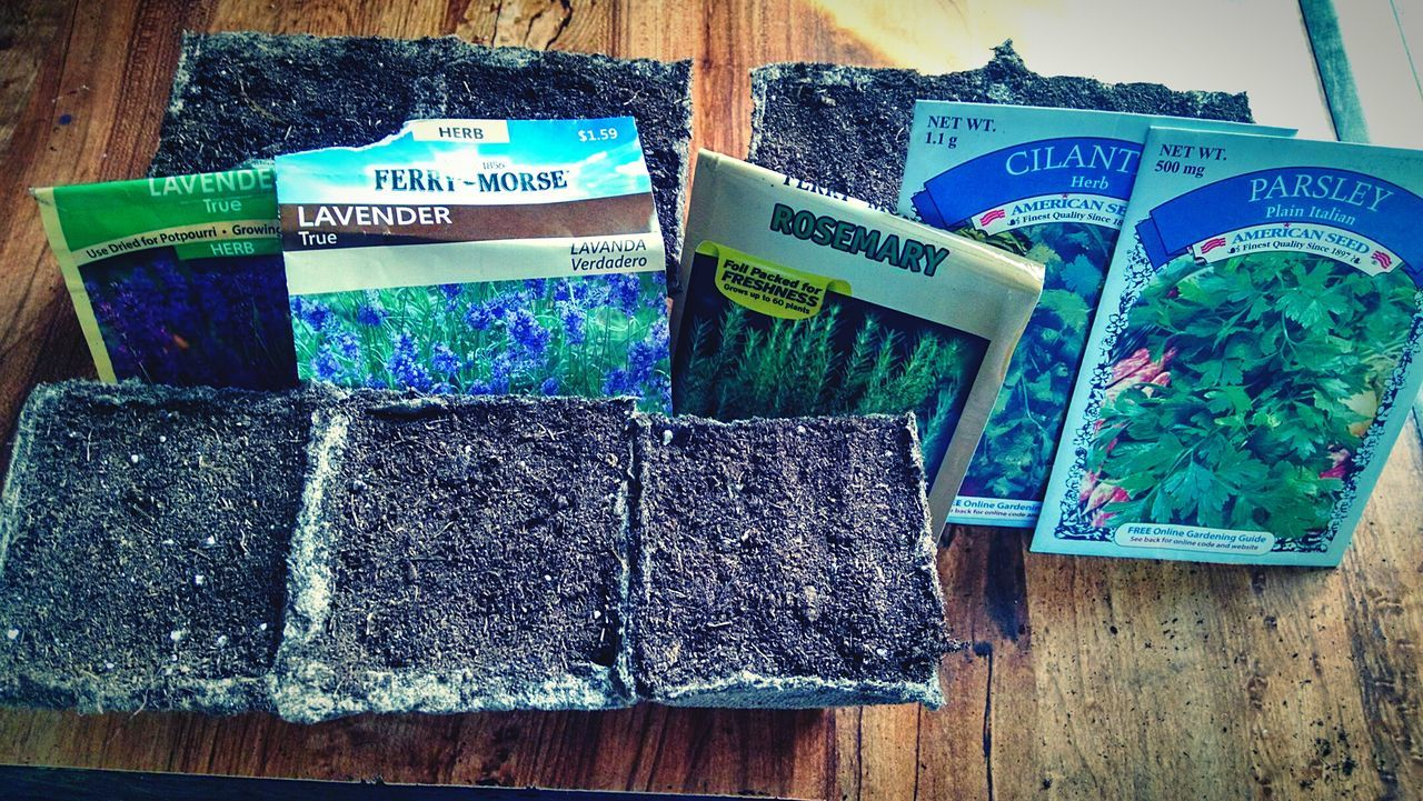 Planting Plants 🌱 Planting Seeds Lavender Rosemary Cilantro Parsley Dirt Seeds Growth Herbs Natural Earth Nature Nature_collection Hobby Therapeutic
