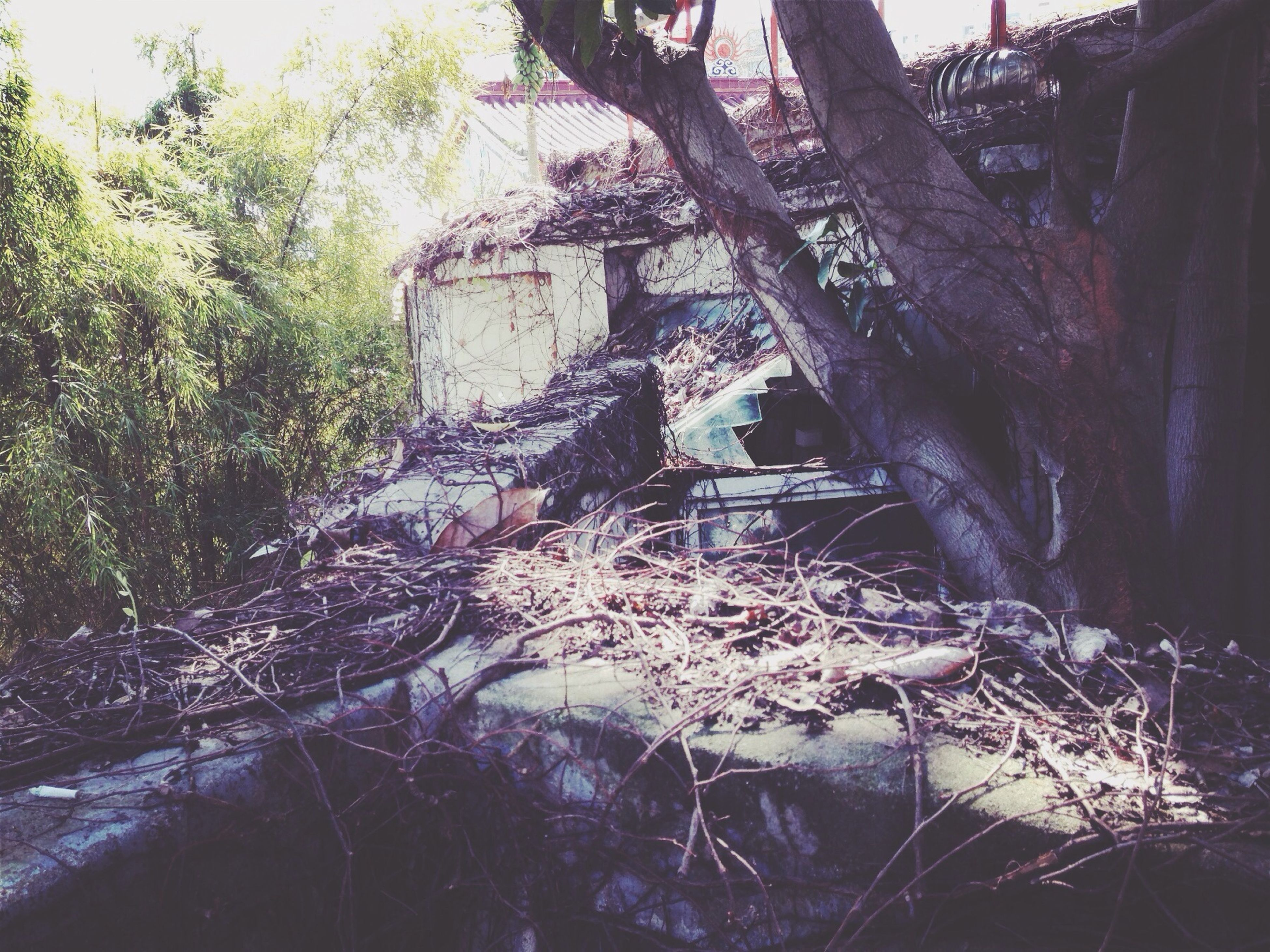 tree, built structure, architecture, abandoned, building exterior, damaged, plant, growth, old, forest, tree trunk, obsolete, day, run-down, rock - object, nature, no people, sunlight, outdoors, deterioration
