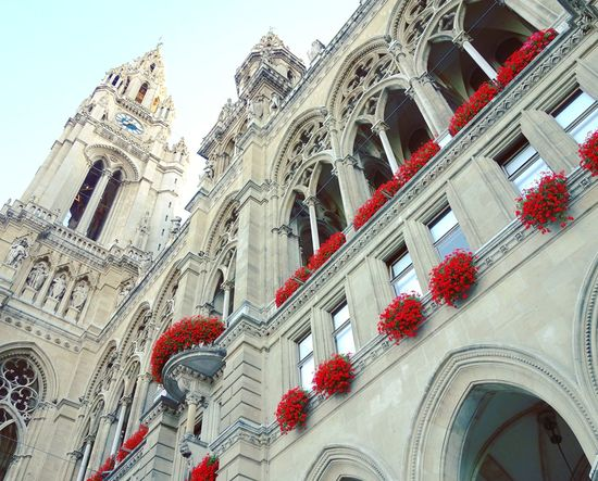 Wiener Rathaus Arch Architectural Feature Architecture Architecture_collection Beautiful Building Exterior Built Structure City Clear Sky Famous Place Flower Flower Collection Gothic Style Low Angle View Outdoors Red Red Flower Street Photography Tourism Travel Destinations Travel Photography