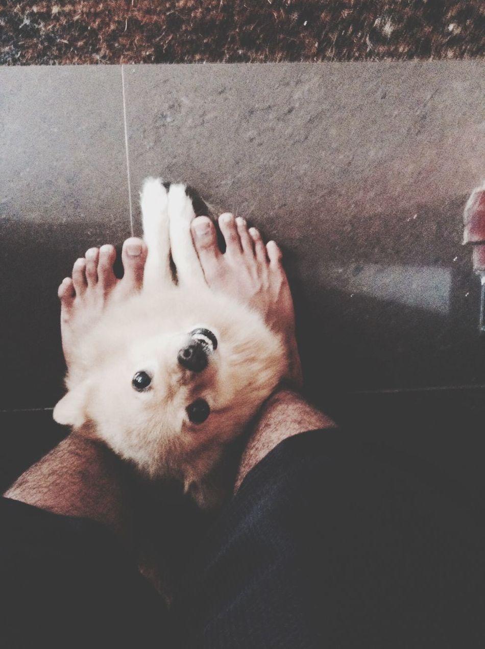 Hangin with my dog :) Good Morning! Happy Dog Athurugiriya