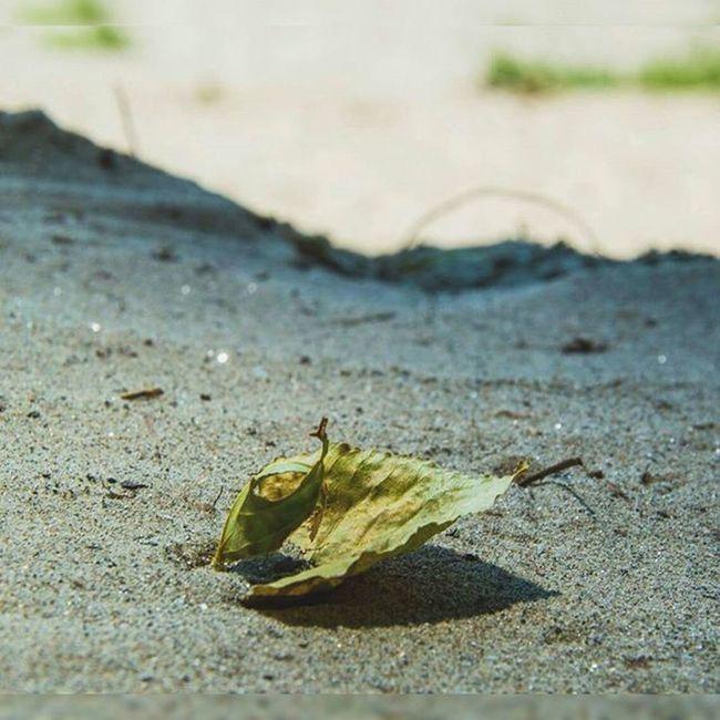 Worldmastershotz Worldmastershotz_nature Leaf Leaves sand beach beautiful instagram photooftheday photography natgeo photography netgeo naturelovers naturelover photo fotografia naturaleza summer 2015 hot burned