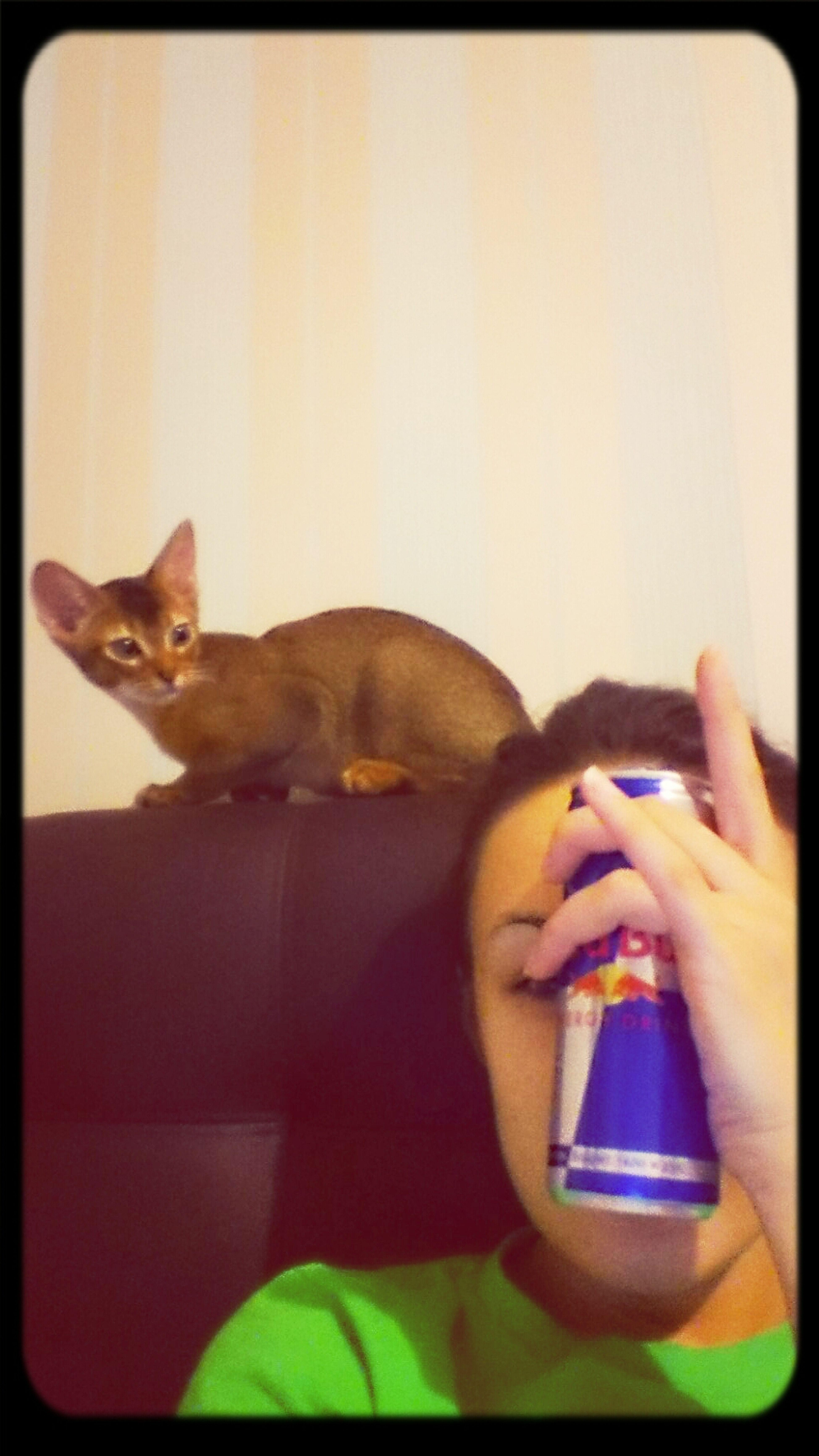 my big love Mylovelycat & Mylovelybrand
