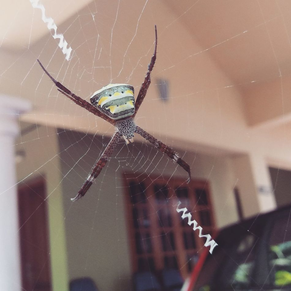 Spider Web Spider Outdoors Survival Web Trap Pray Beautifulwebdesigning construction Art Is Everywhere