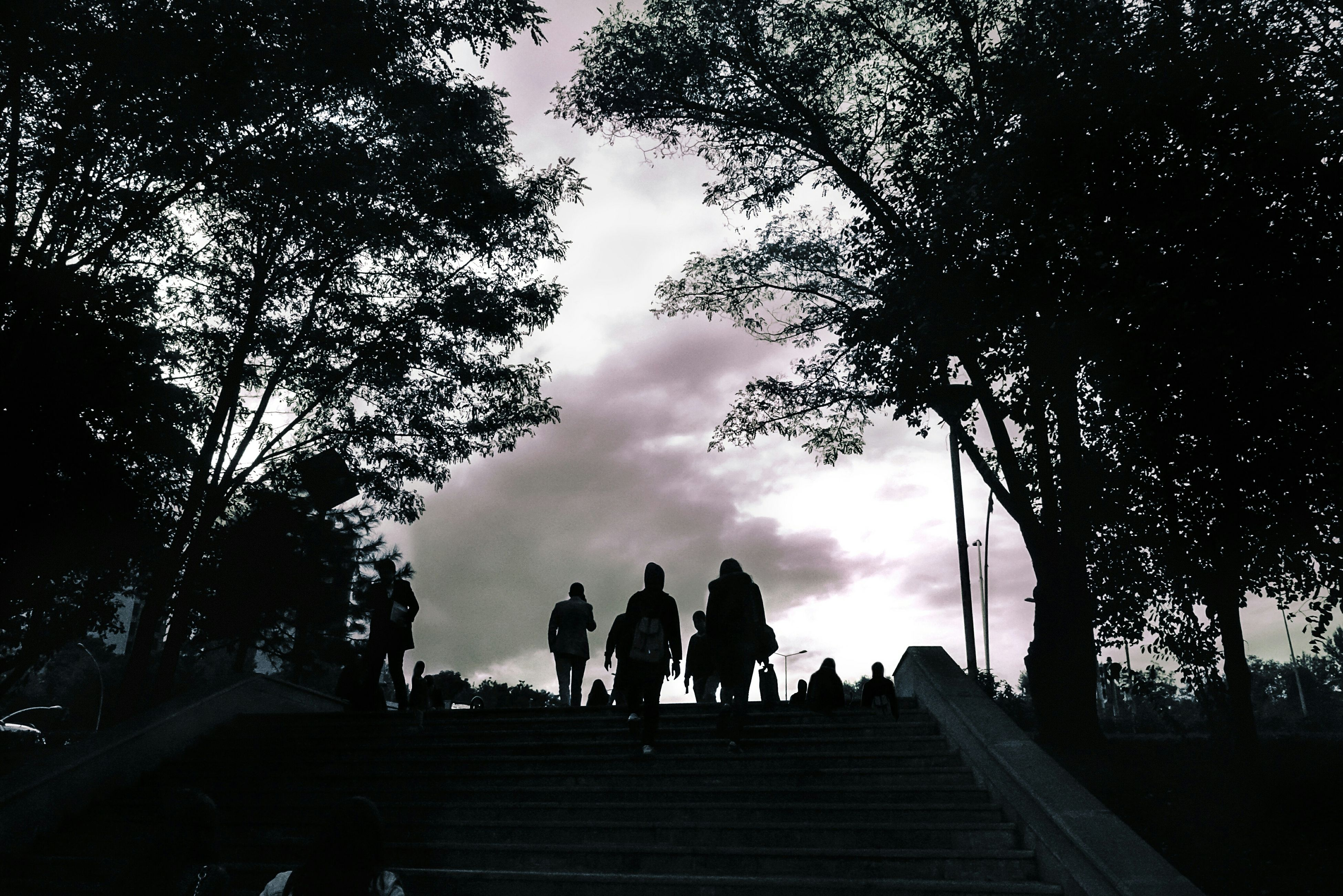 tree, silhouette, steps, men, person, sky, low angle view, togetherness, group of people, adult, day, outline, outdoors, tranquility, nature, tranquil scene, solitude