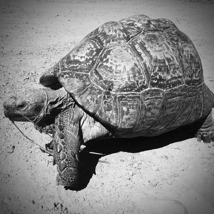 Tortoise Tortoiselife Animal Themes Animals In The Wild One Animal Animal Wildlife Outdoors No People Day Close-up Nature
