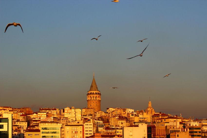 Istanbul Turkey Fotograf Fotografheryerde Canonphotography Canonturkey Canontürkiye Photooftheday Photoblogger Galatatower Galatakulesi Taksim Eminönü Karaköy