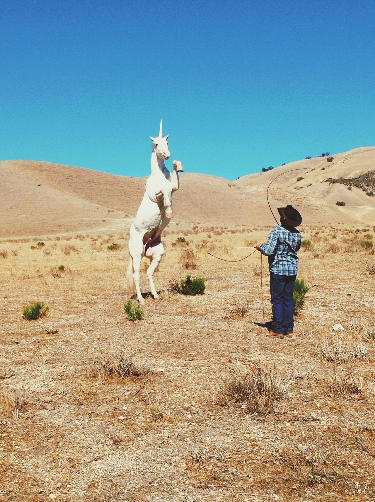 how to train a unicorn Making Movies Stand Out From The Crowd