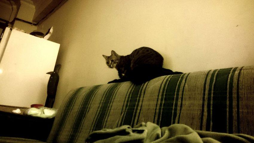 Cat Kittycat Mycat
