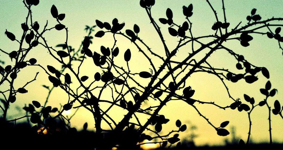 🌱❤ LoveNature Amazing Colorful EyeEm PhotoByMe Colors Of Autumn Lovetheview Tuscany Italy Lovephotography  EyeEmBestPics From My Point Of View Helloworld Atthelake Beautiful Nature Happy EnjoyTheMoment Photogrpahy Nikon Eyeemgallery ThatsMe Frommyeyes Travel Ilovethat Sunset