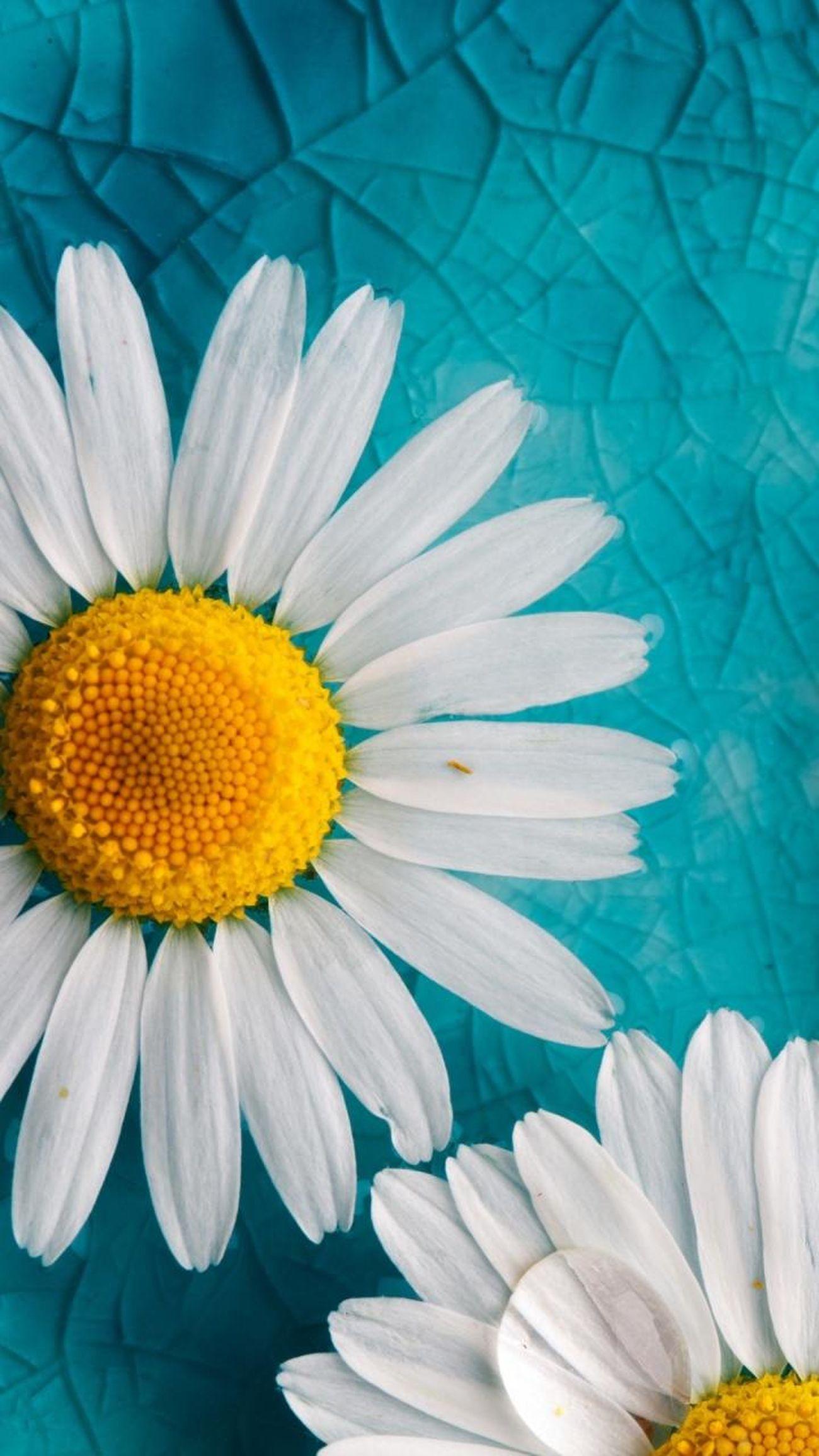 Relaxing Izmir/ Bornova EyeEm Nature Lover EyeEm Best Shots EyeEmBestPics EyeEm Flower Flower Collection