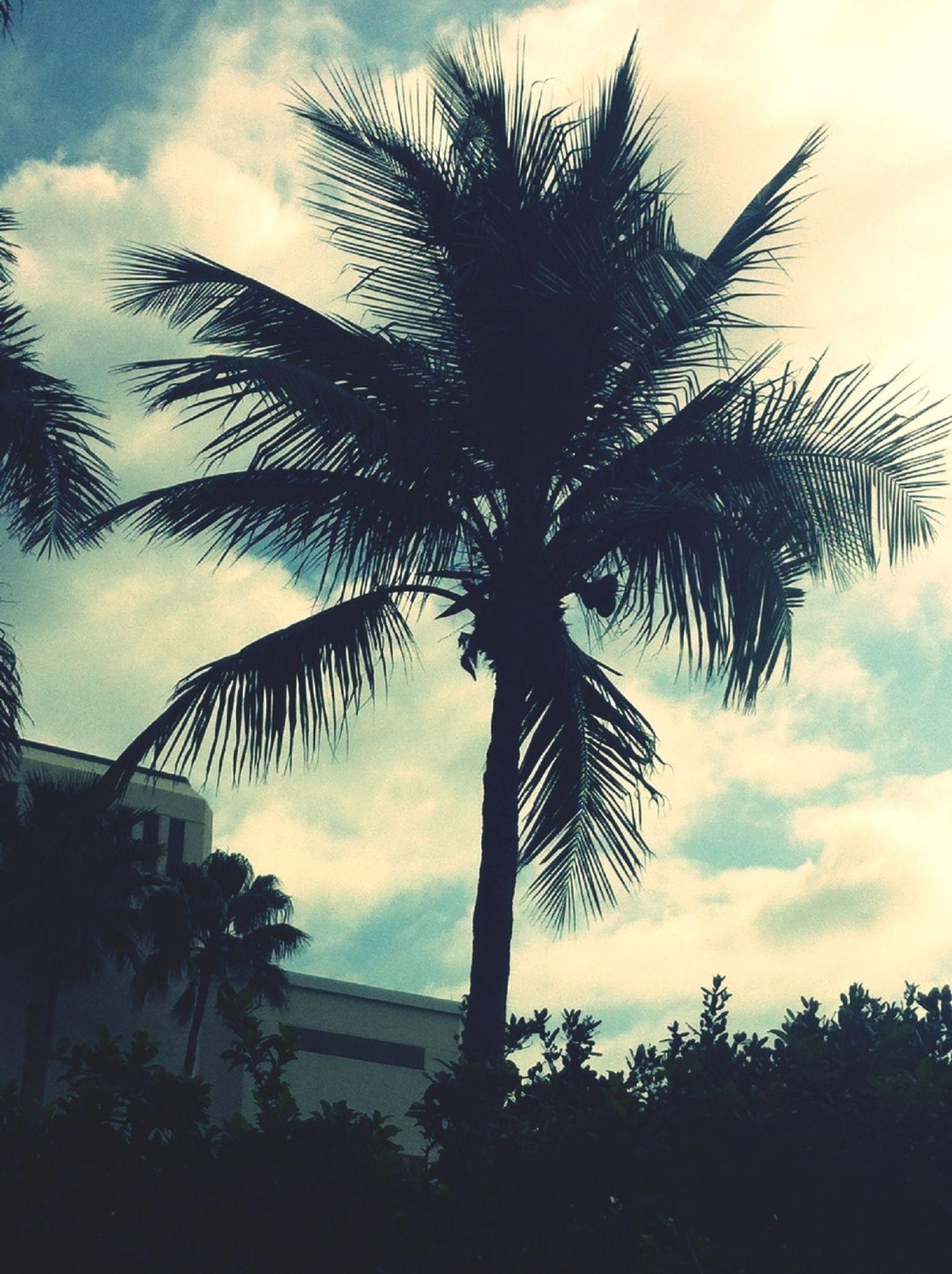 Perfect Pom-pom Tree