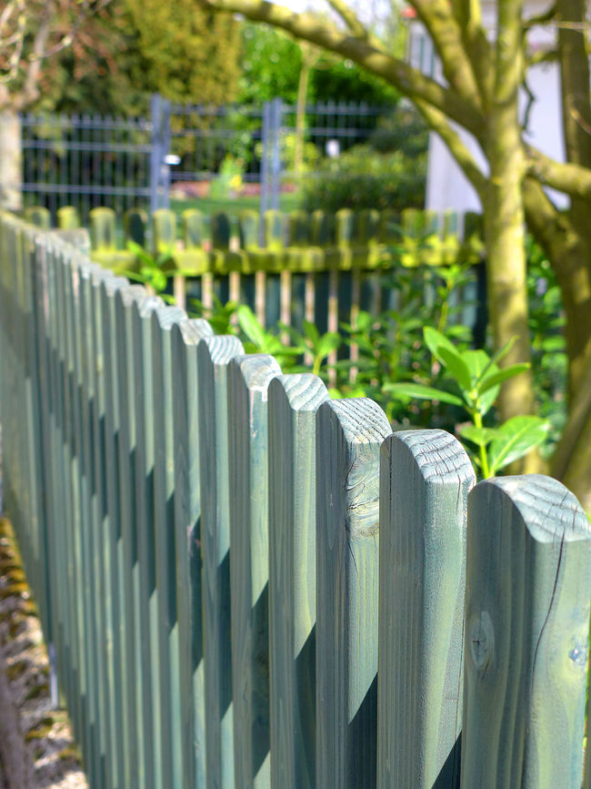 Wooden fence Fence Fencepost Fencing Post Focus On Foreground Green Color Grey In A Row Lattenzaun Tree Wooden Fence Zaun