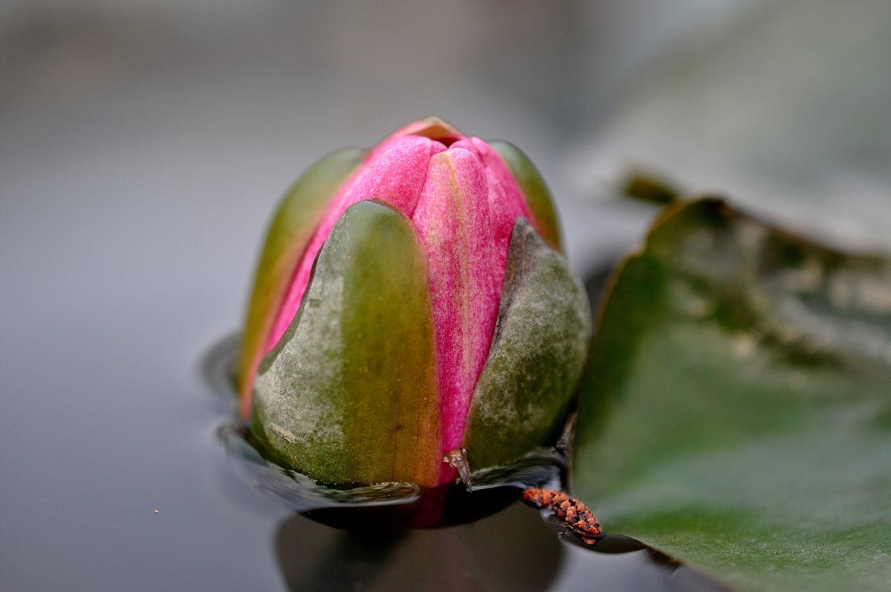 Detail Shot Of Flower In Water