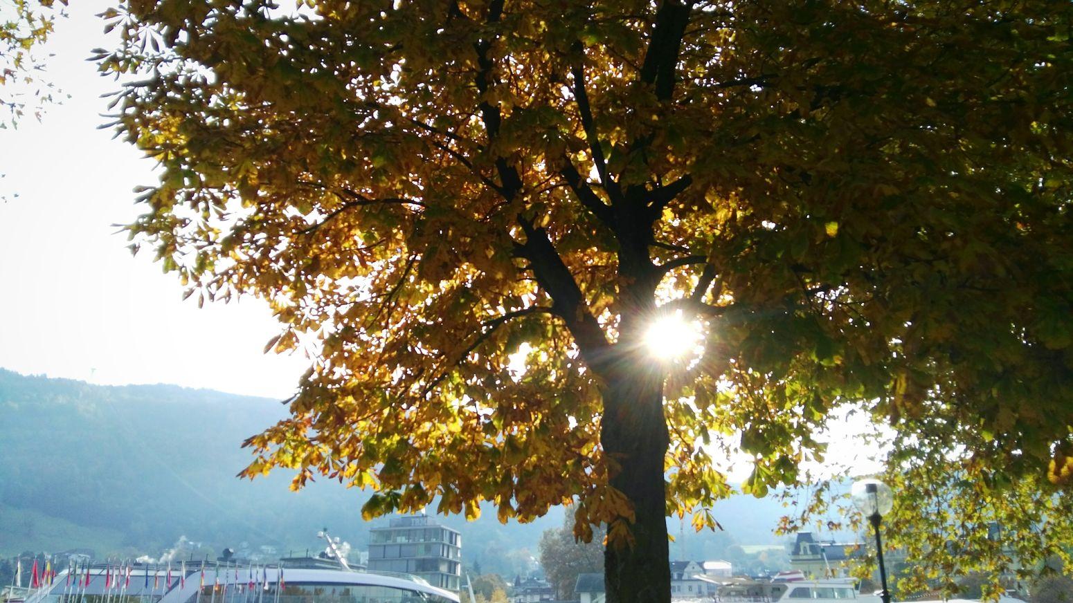 Lichtblick Outdoors Beauty In Nature Travel Destinations City Schnappschuss Im Vorbeifahren Herbststimmung Autumn Colors Autumn Herbst Herbstfarben Momentaufnahme