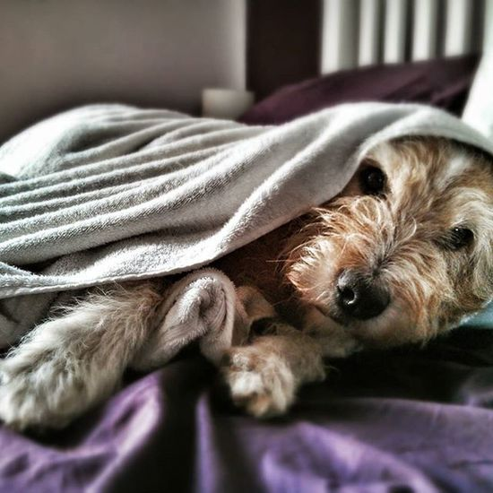 Hitch the dog. I'm Ready For My Close Up Hitch The Dog Q Quilt Quilted Here Belongs To Me Telling Stories Differently My Favorite Photo The Portraitist - 2016 EyeEm Awards Home Is Where The Art Is Pet Portraits