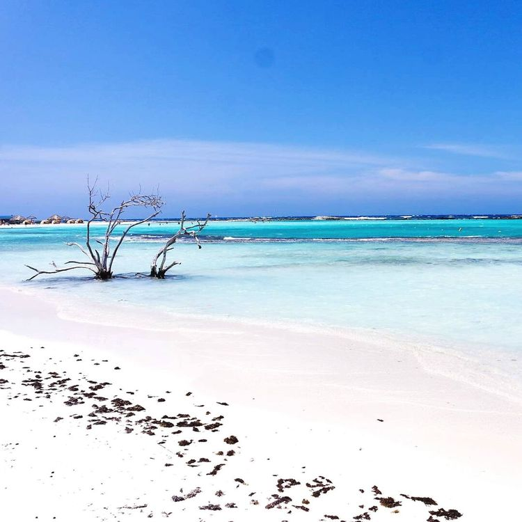 Insta @beforewedie.de Sea Beach Sand Blue Sky Beauty In Nature Nature Horizon Over Water First Eyeem Photo Aruba One Happy Island Aruba Baby Beach