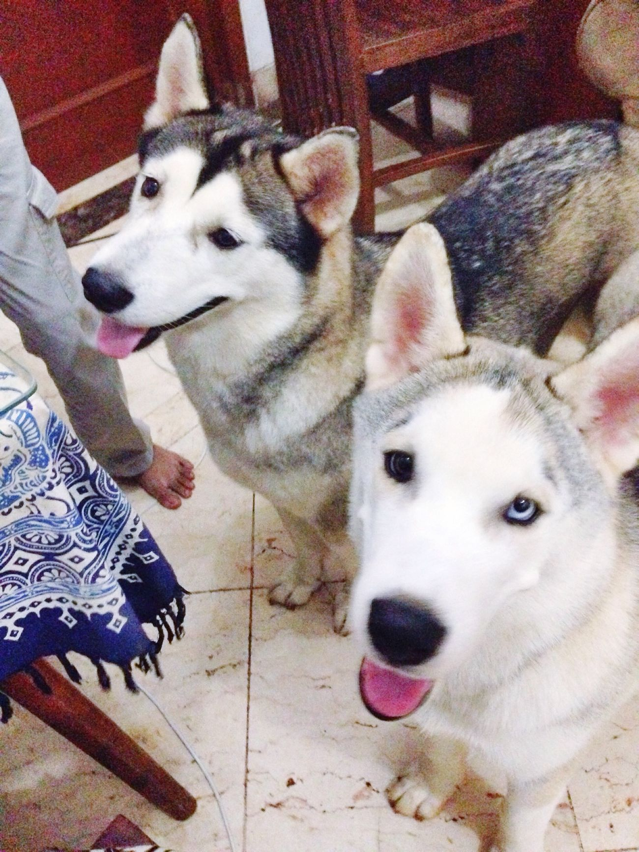 Kazuo and Baileys Familia By ITag Pets By ITag Animal By ITag Hobbies By ITag The Families By ITag
