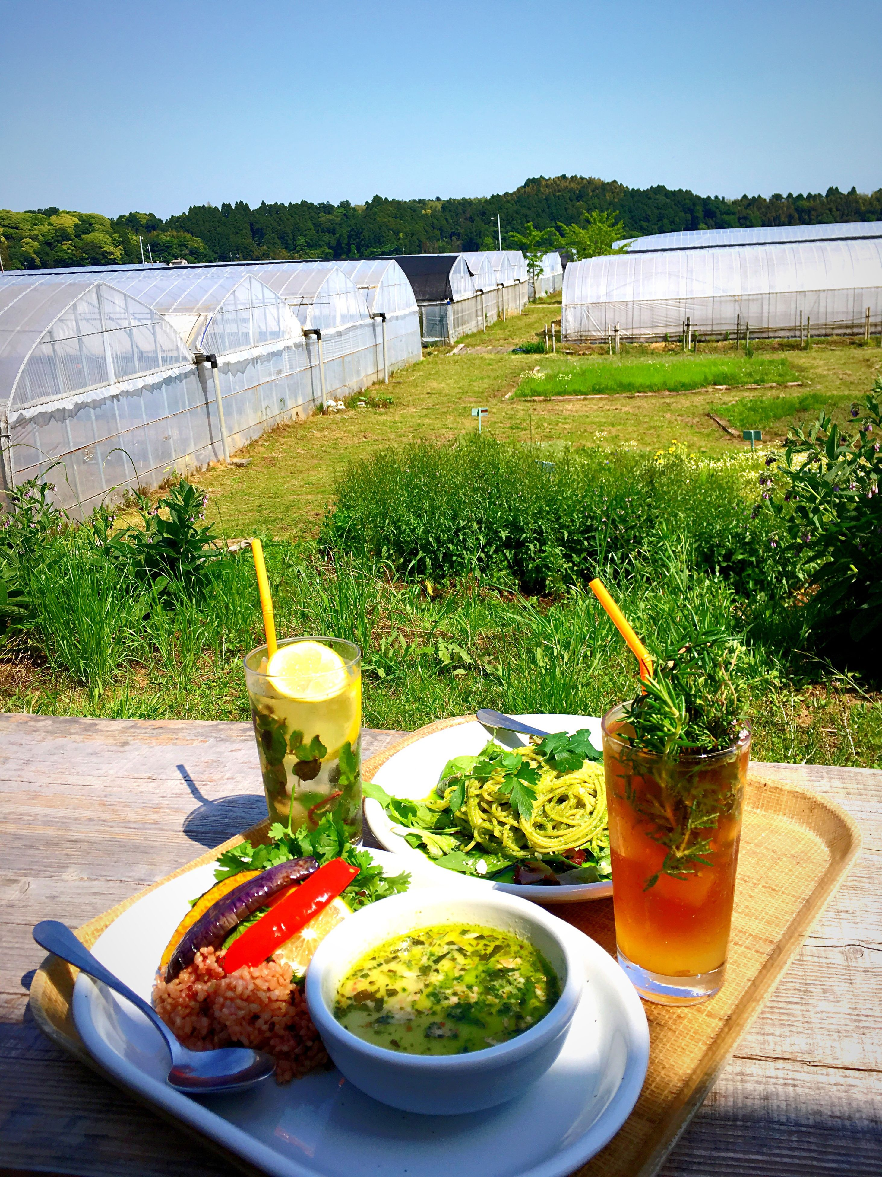 food and drink, drink, refreshment, freshness, food, alcohol, table, plant, beer, vegetable, healthy eating, plate, no people, day, outdoors, growth, drinking glass, green color, grass, lettuce, nature, greenhouse, ready-to-eat