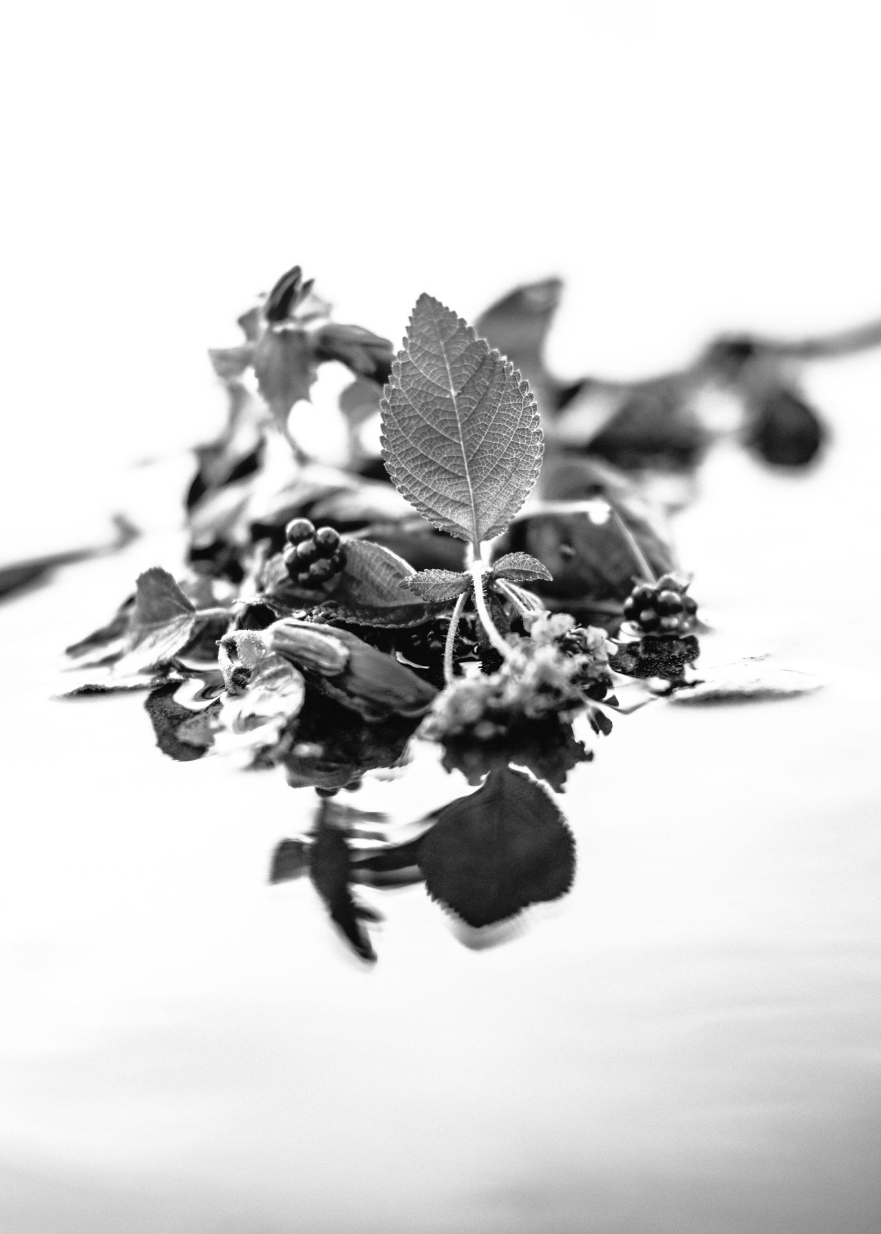 Abstract Photography Close-up Conceptual Photography  Day Fine Art Photography Flowers Food Food And Drink Freshness Leaf Minimal Nature No People Outdoors Scenics Selective Focus Studio Shot Water Water Reflections Water_collection White Background
