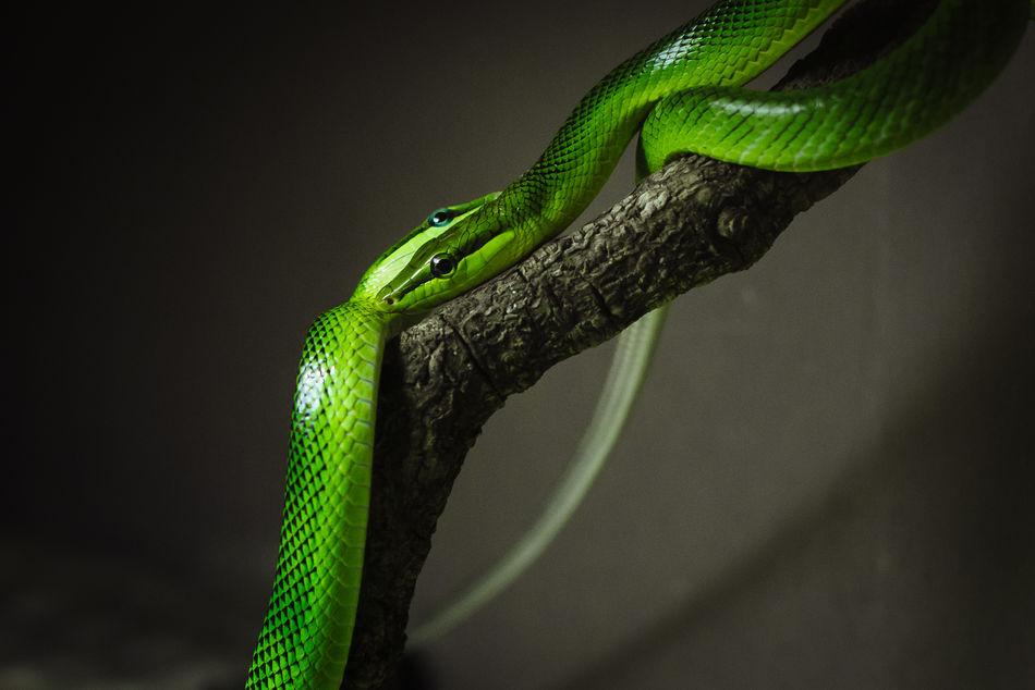 Beautiful stock photos of snakes, Animal Themes, Animal Wildlife, Animals In The Wild, Berlin