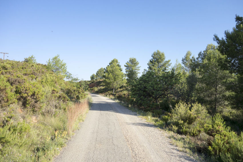 Bike Blue Castellón Clear Sky Cycling Day Forest Green Color Greenway Landscape Nature Nature No People Ojos Negros Outdoors Plant Road Scenics SPAIN The Way Forward Tranquil Scene Tree València Via Verde Way