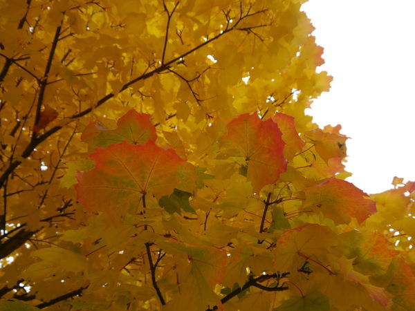 Autumn Beauty In Nature Day Nature No People Outdoors Yellow Yellow Color