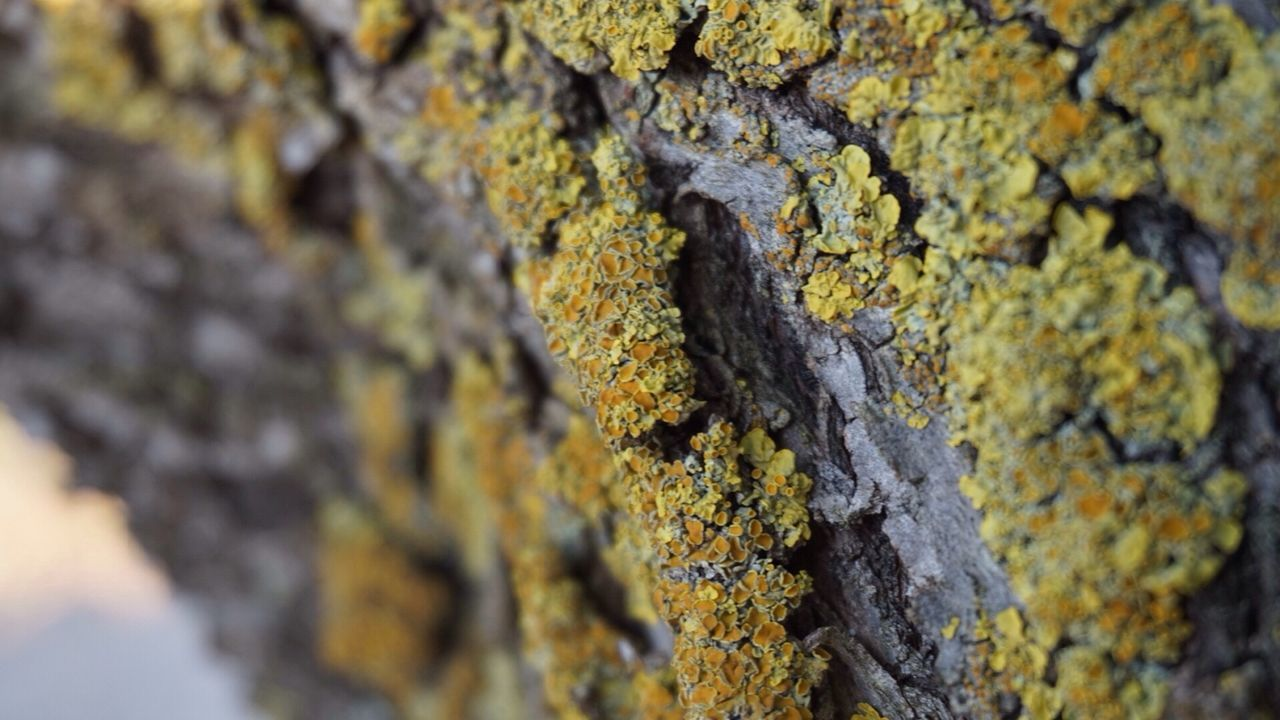 textured, tree trunk, lichen, close-up, tree, rough, full frame, day, no people, moss, bark, growth, outdoors, nature