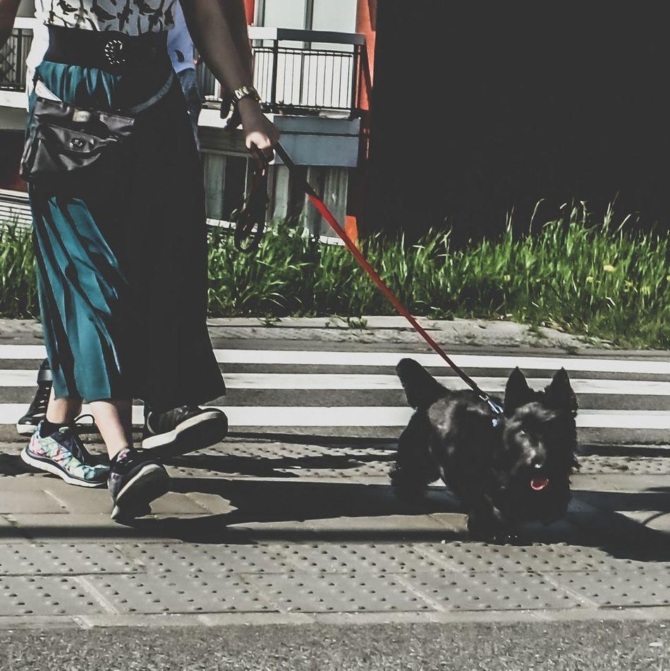 Streetphotography Dog Street Photographer Street Photography FujiFilm X20 LightroomMobile Janleegwater
