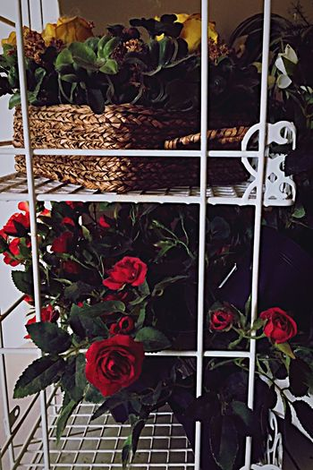 Flowers Decoration Beautiful Flower Collection Check This Out Taking Photos Enjoying Life ♡