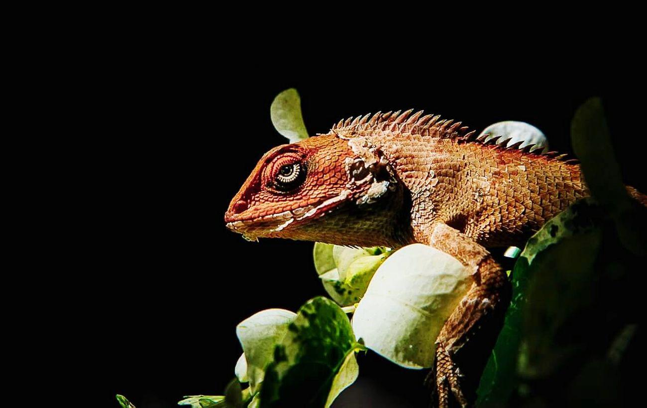 Macro Photography Lizard Subashkarkiphotography.