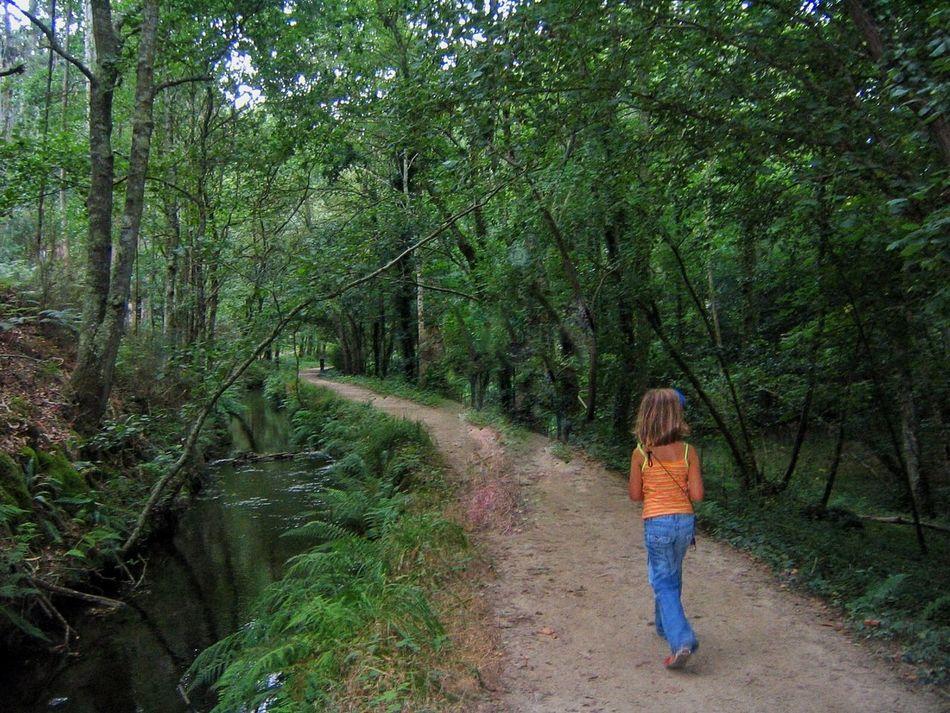 Buscando hadas!! Viveiro Galicia Somosfelices EyeEm Nature Lover Nature_collection Trees Authentic Moments