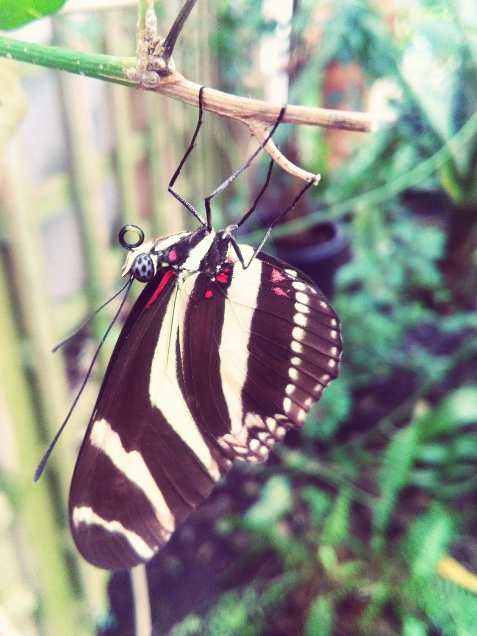 insect, animals in the wild, animal themes, one animal, butterfly - insect, wildlife, animal wildlife, no people, butterfly, focus on foreground, close-up, day, outdoors, nature, perching, spread wings